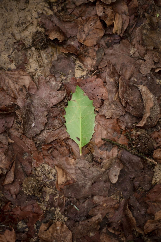 green leaf on brown dried leaves