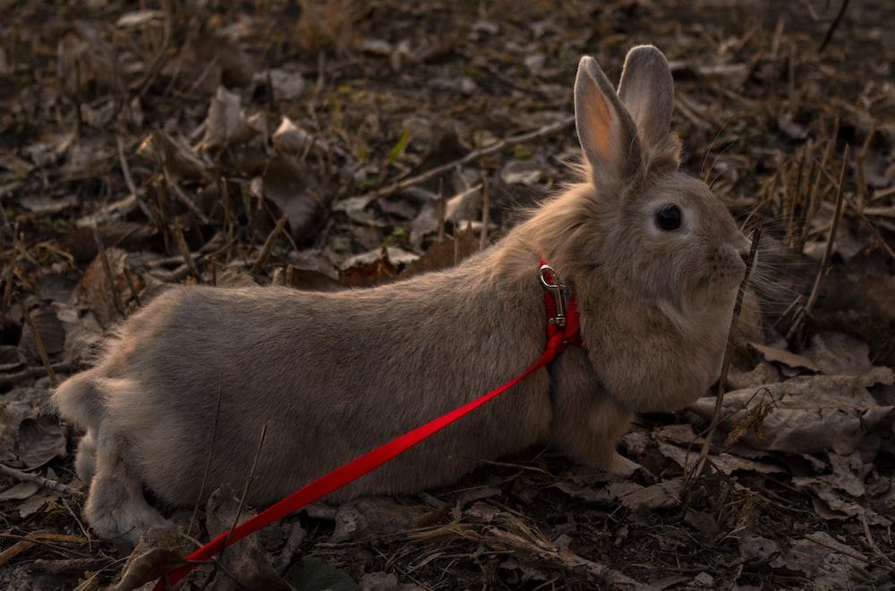 brown rabbit on brown dried leaves