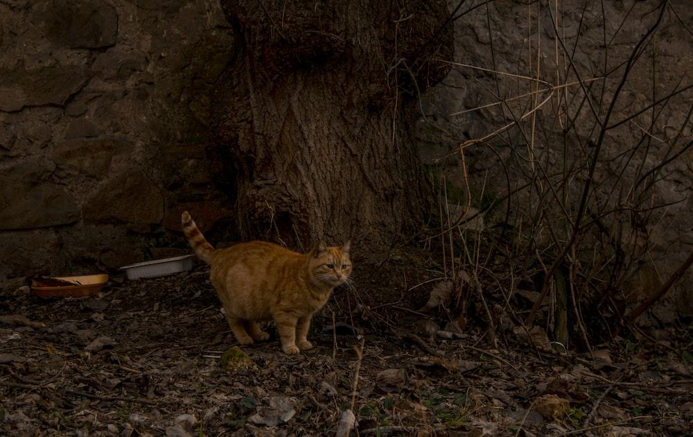 orange tabby cat on brown soil