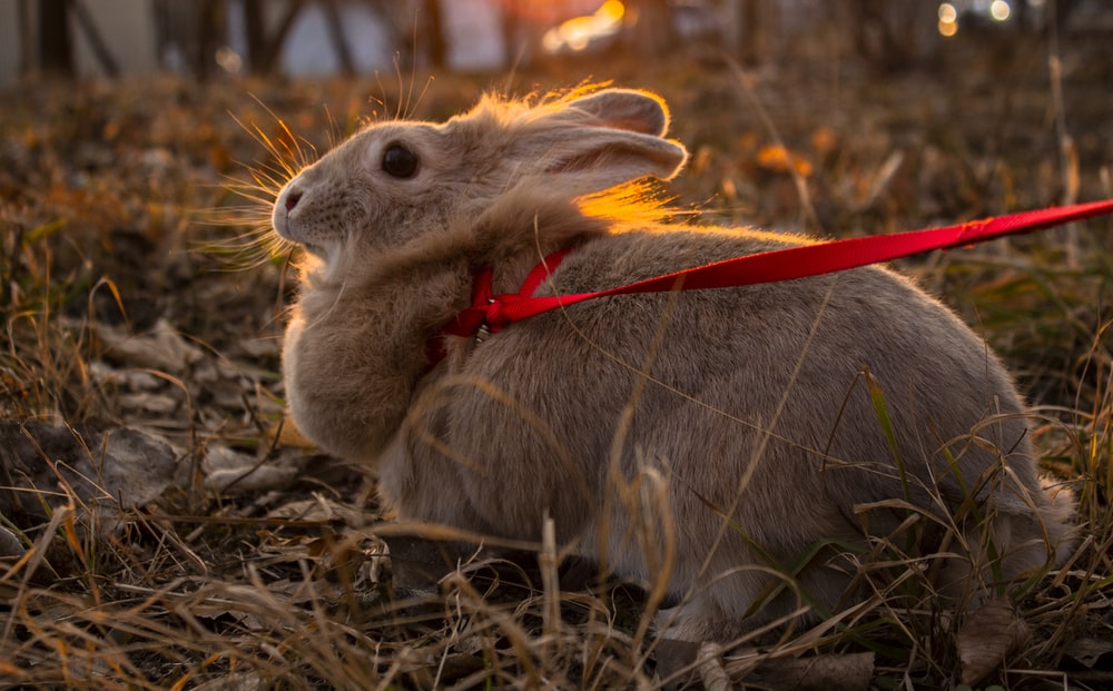 brown rabbit on brown dried grass during daytime