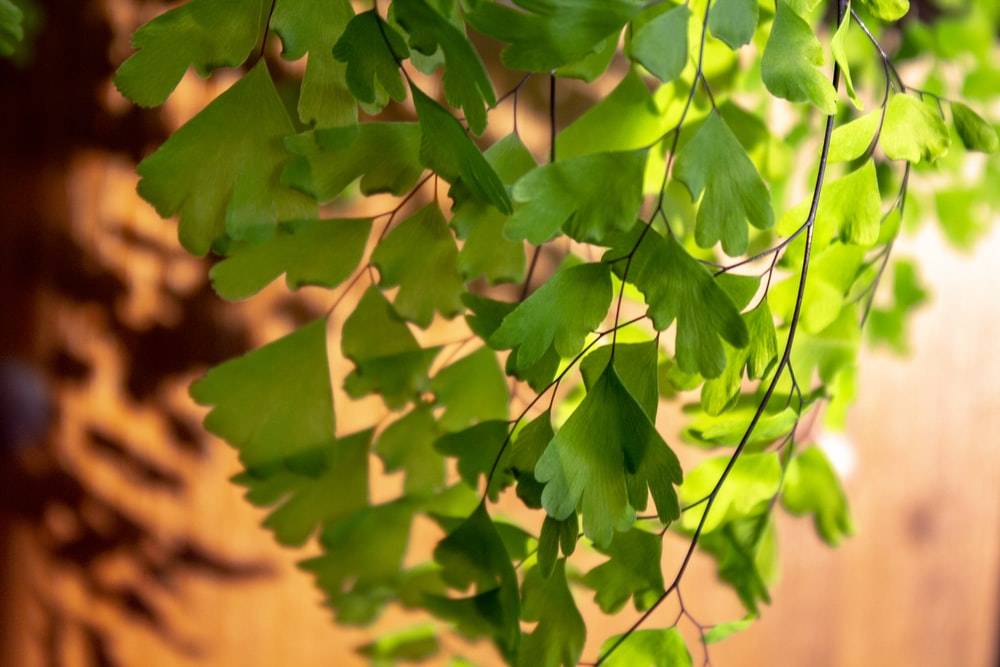 green and yellow leaves during daytime