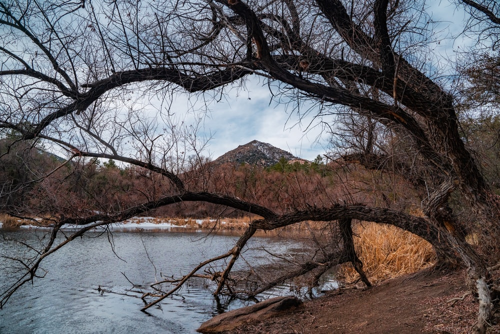 brown trees near body of water during daytime