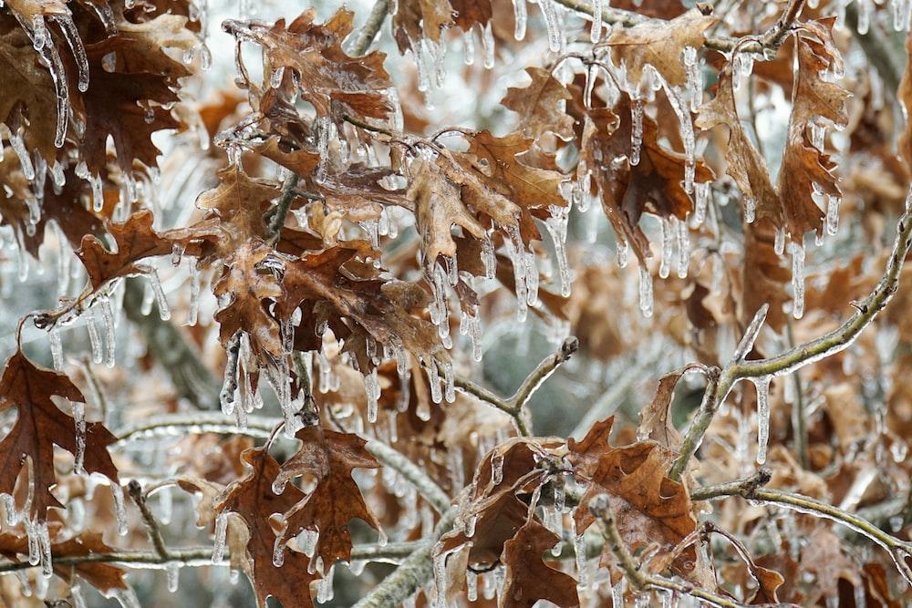 brown leaves on brown tree branch