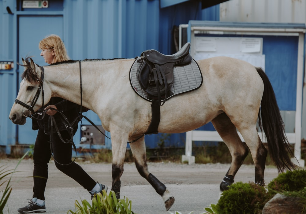 woman in black leather jacket riding white horse during daytime