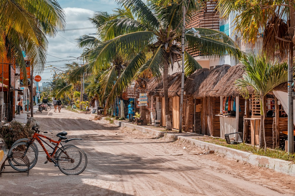 bicycle parked beside palm tree near brown wooden building during daytime