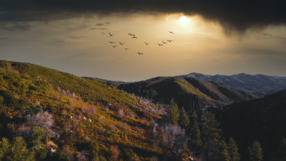 birds flying over green and brown trees during daytime