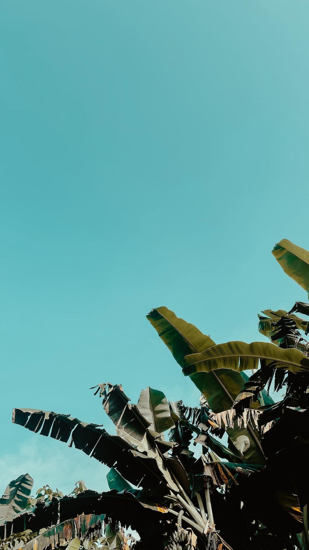 green banana tree under blue sky during daytime