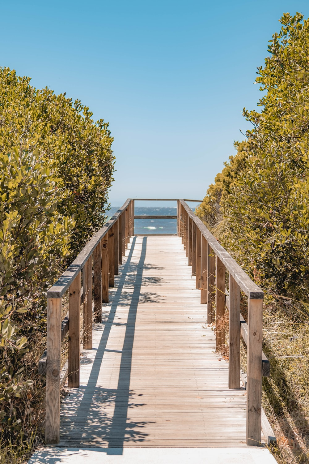 brown wooden dock near green trees under blue sky during daytime