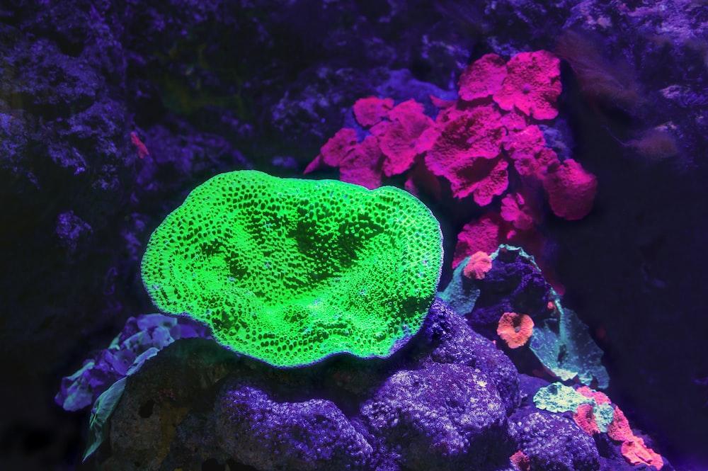 green coral reef in fish tank