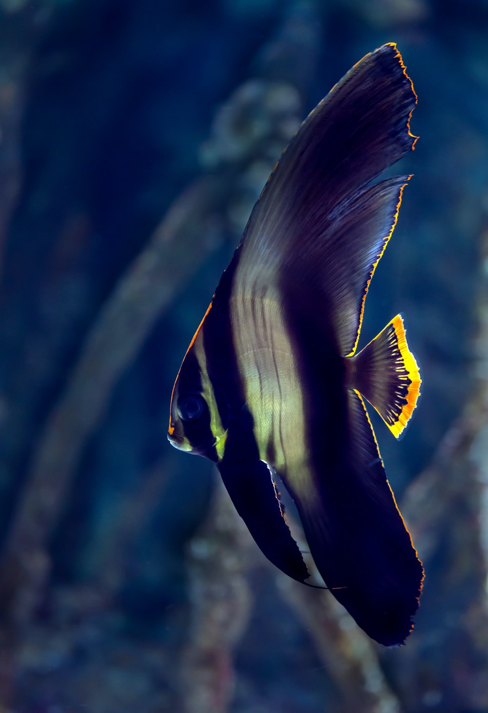 black and white fish in close up photography