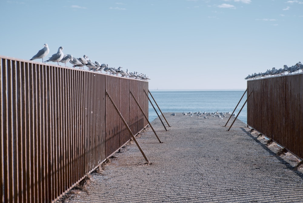 brown wooden fence on beach during daytime