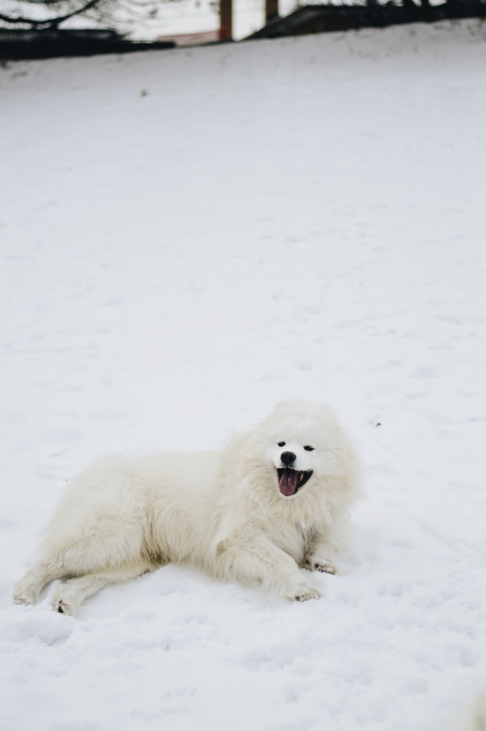 white long coated dog on snow covered ground