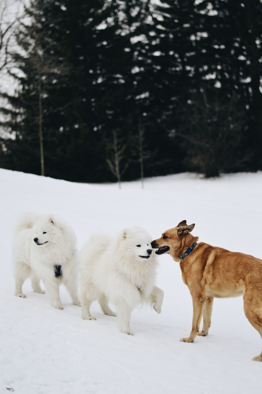 brown and white dogs on snow covered ground during daytime