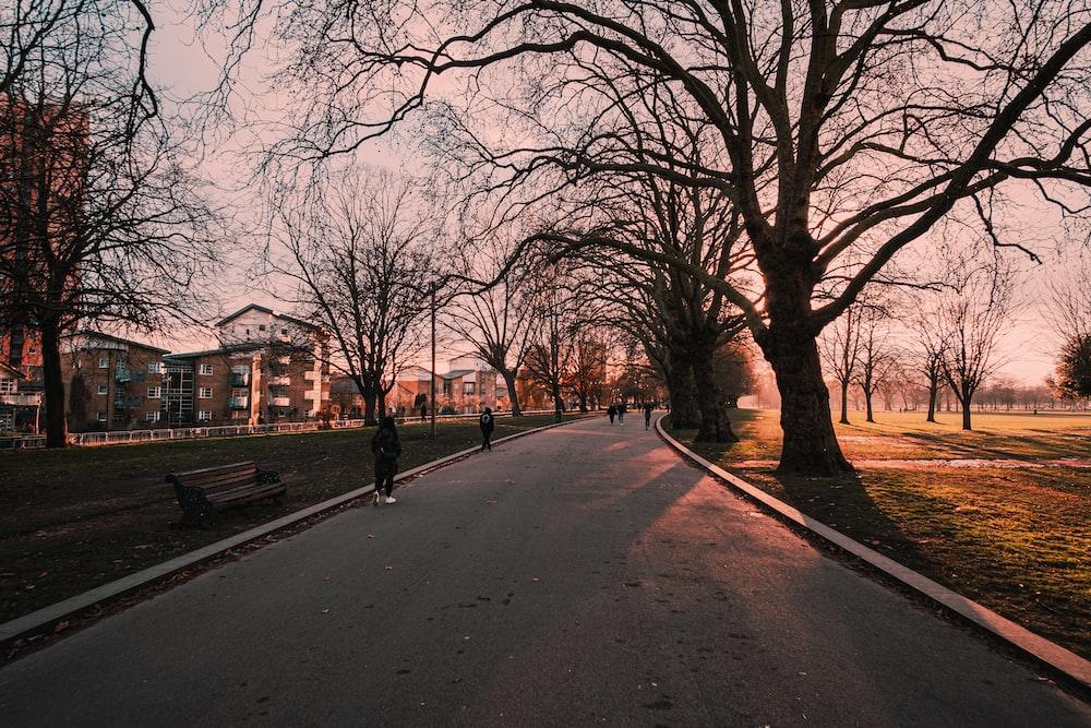 bare trees on gray asphalt road during daytime