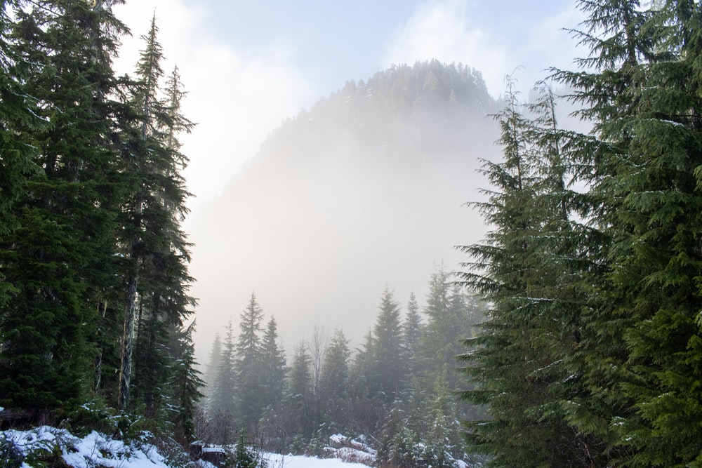 green pine trees covered with snow during daytime