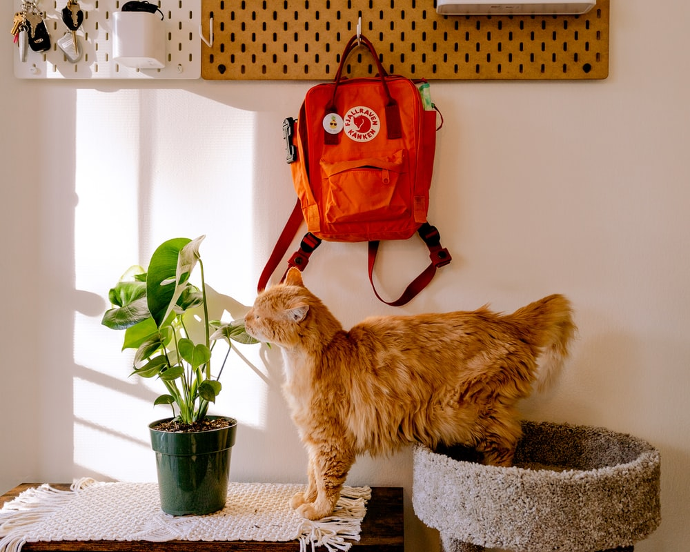 orange tabby cat on black and gray concrete table