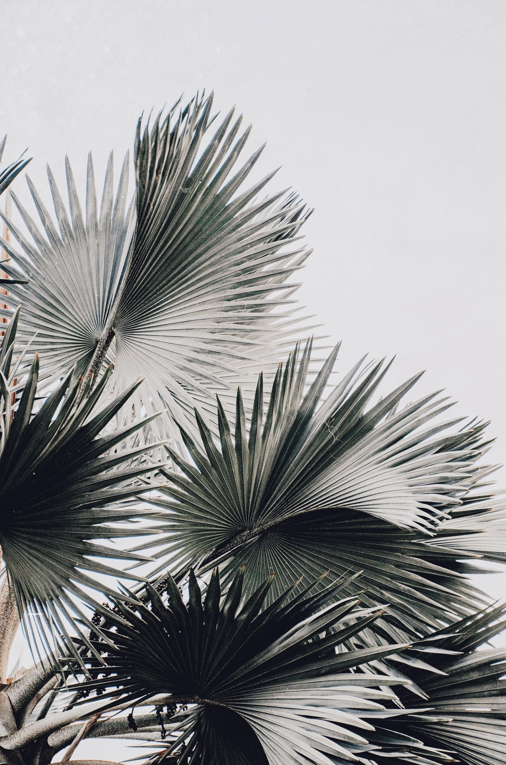 20+ White Aesthetic Pictures   Download Free Images on Unsplash
