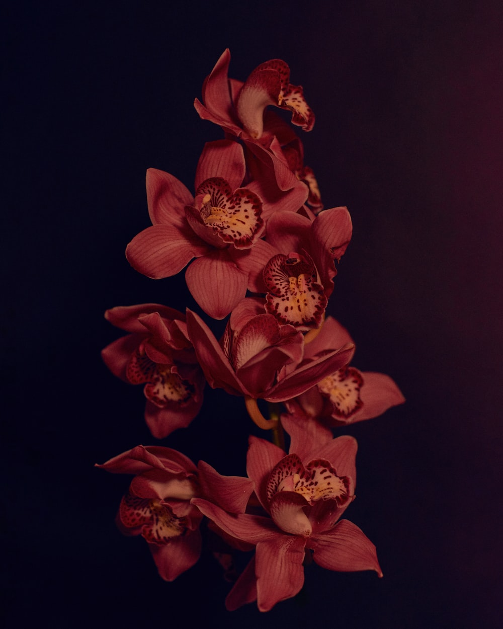 red and yellow flower in black background
