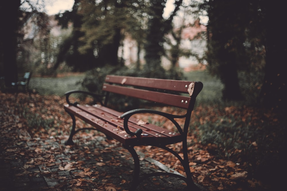 brown wooden bench in forest during daytime