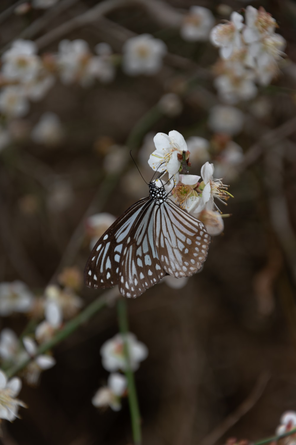 white and black butterfly perched on white flower in close up photography during daytime