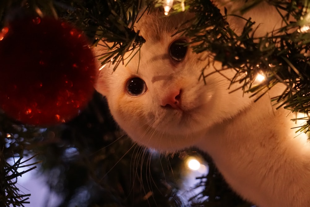 white cat on green tree