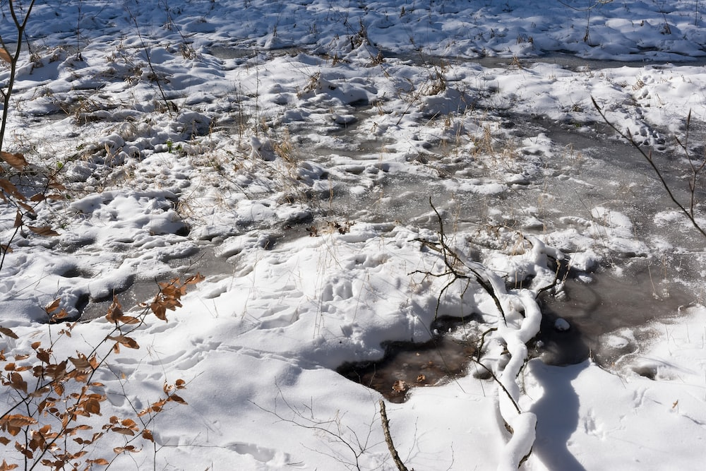 snow covered ground during daytime