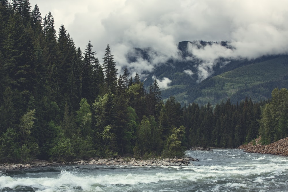 green pine trees near body of water under white clouds during daytime