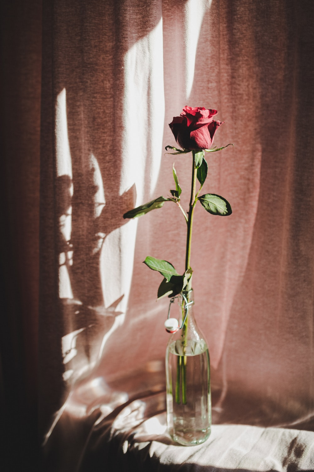 red rose in clear glass vase