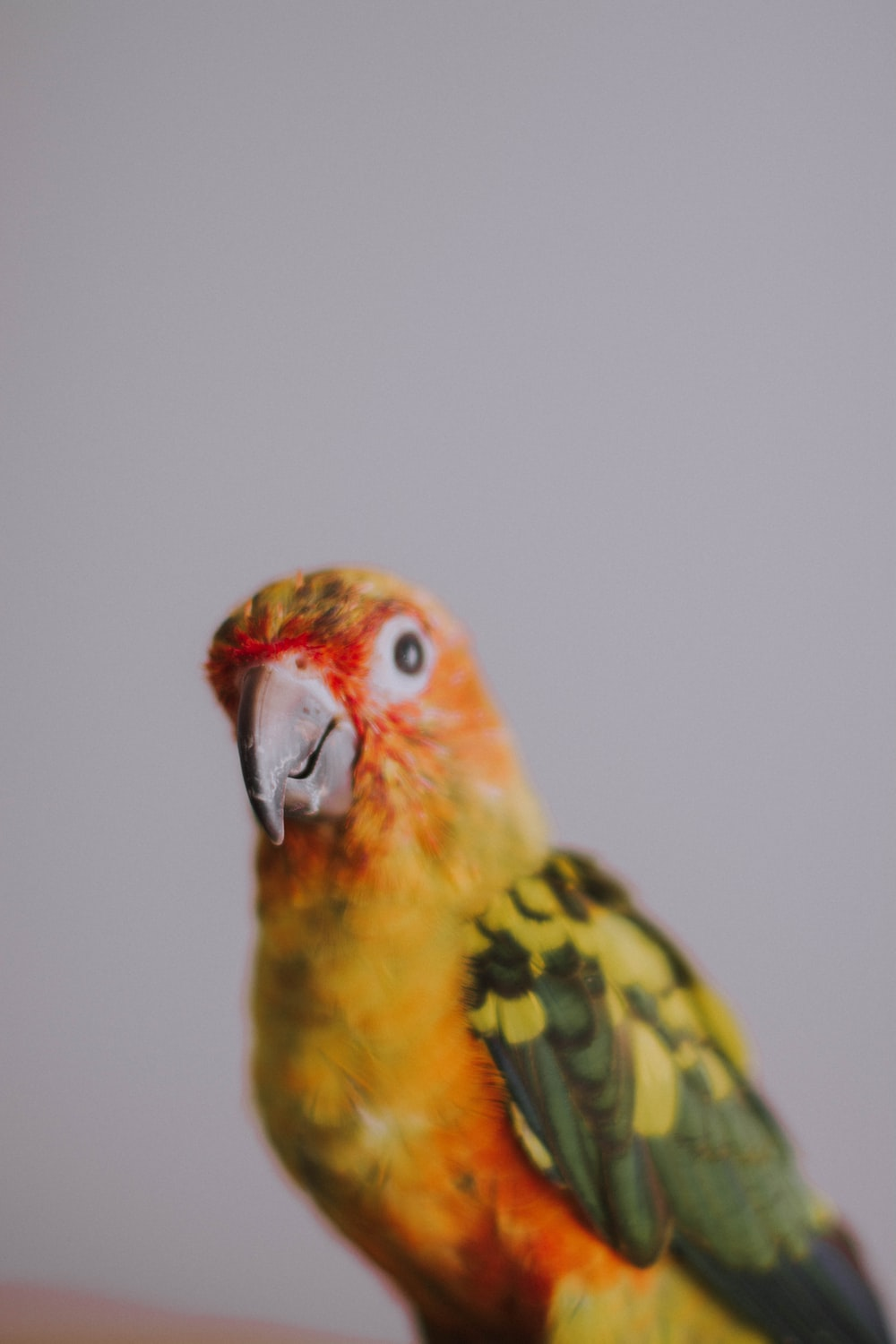 red yellow and green bird