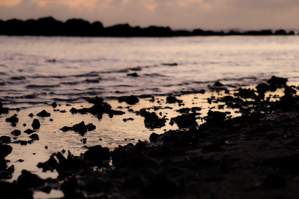 silhouette of rocks on beach during sunset
