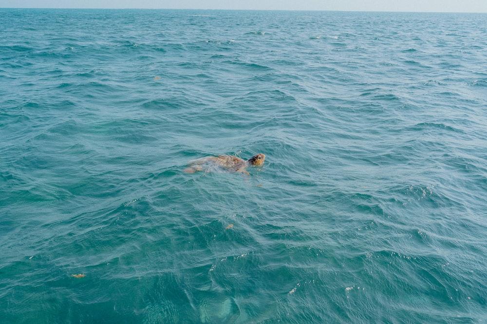 woman in black bikini swimming in the sea