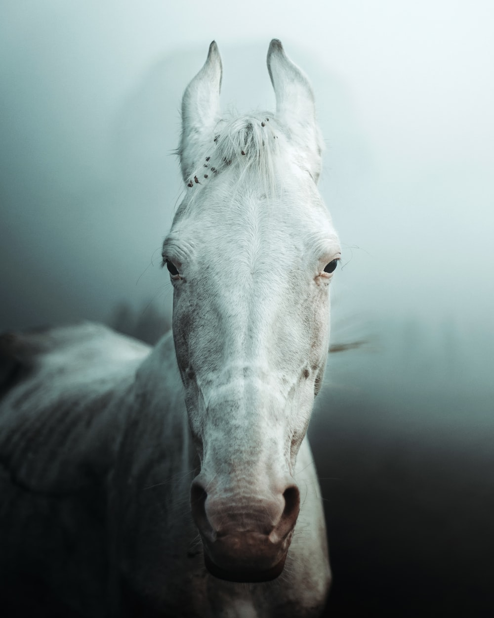 white horse head in close up photography