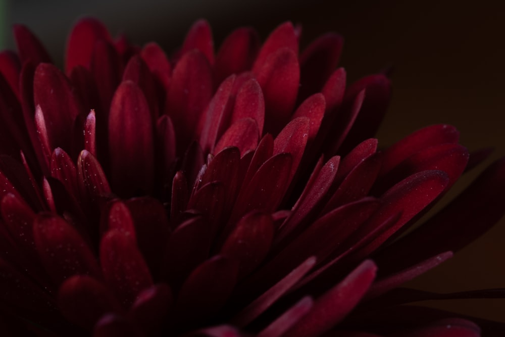 red flower in close up photography