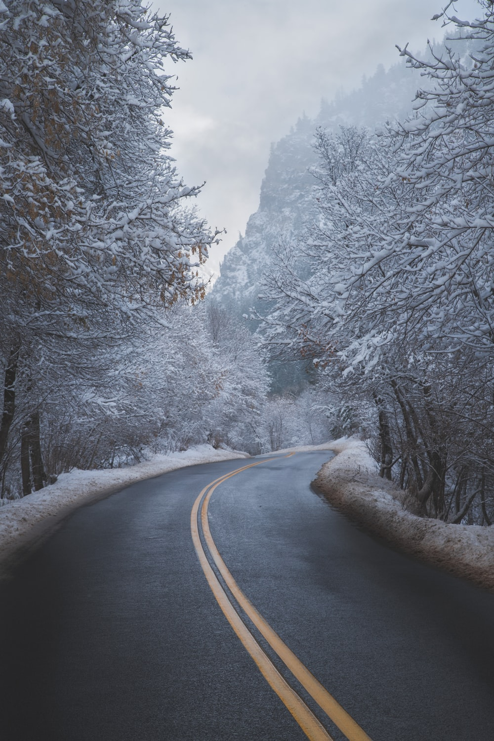 black asphalt road between trees covered with snow during daytime