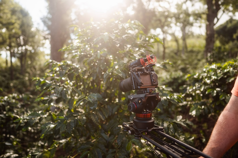 red and black robot on black metal stand surrounded by green leaves during daytime