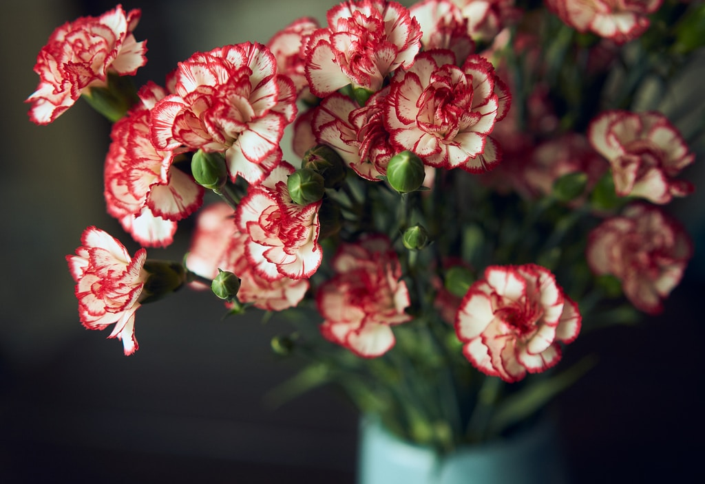 pink flowers in green ceramic vase