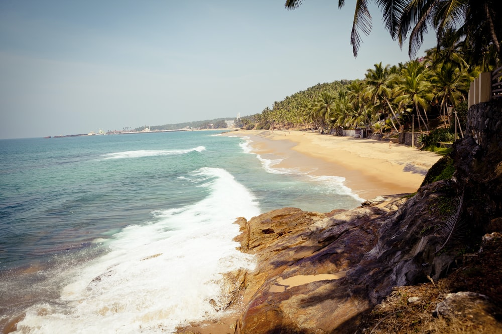 green palm tree on seashore during daytime