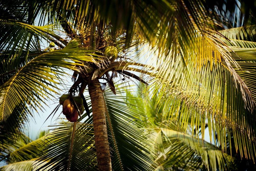 brown bird on green palm tree during daytime