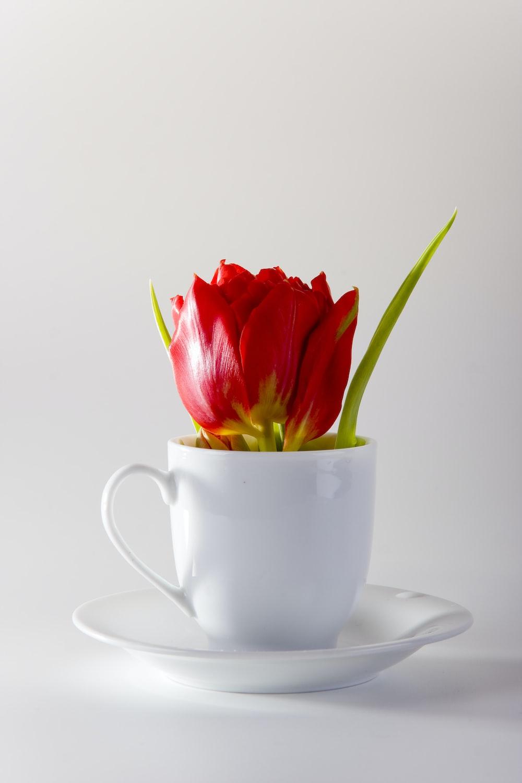 red rose on white ceramic teacup