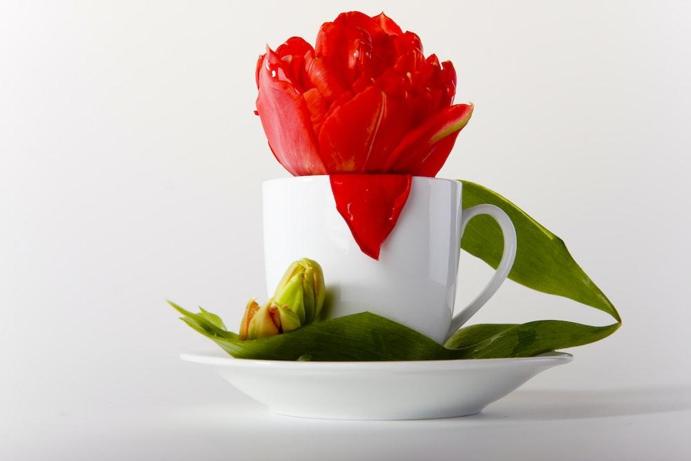 red rose on white ceramic mug