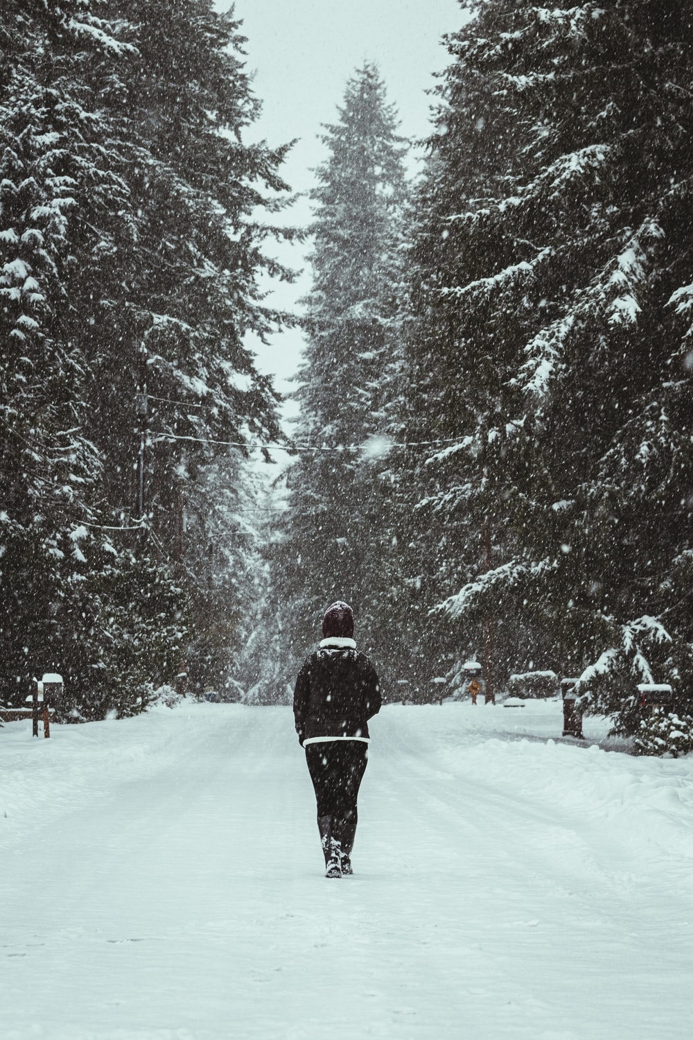 person in black jacket walking on snow covered ground near trees during daytime