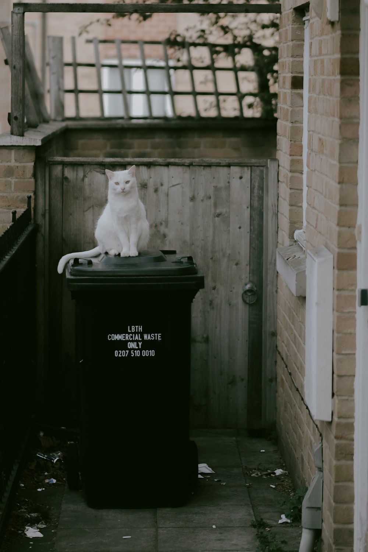 white cat on black trash bin