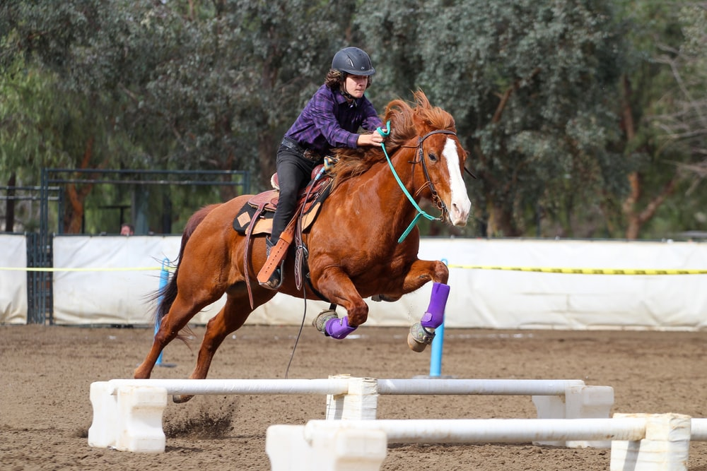 person in black jacket riding brown horse during daytime