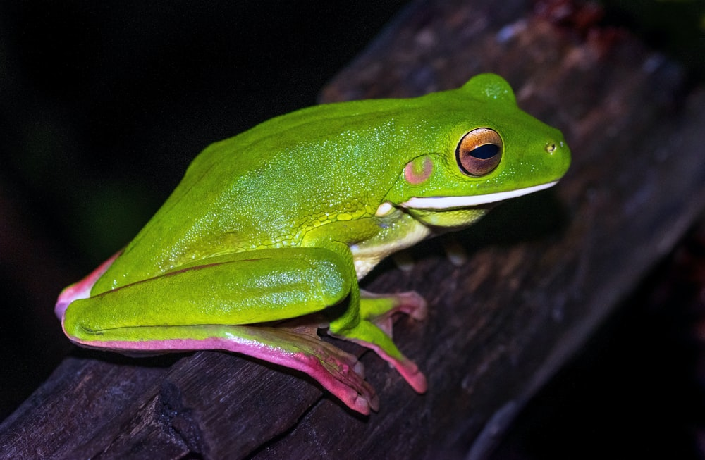 green frog on brown tree branch