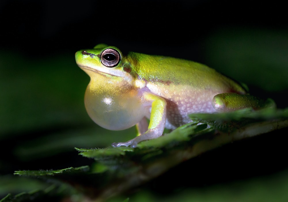 green frog on green leaf Plantscience Skincare Experts