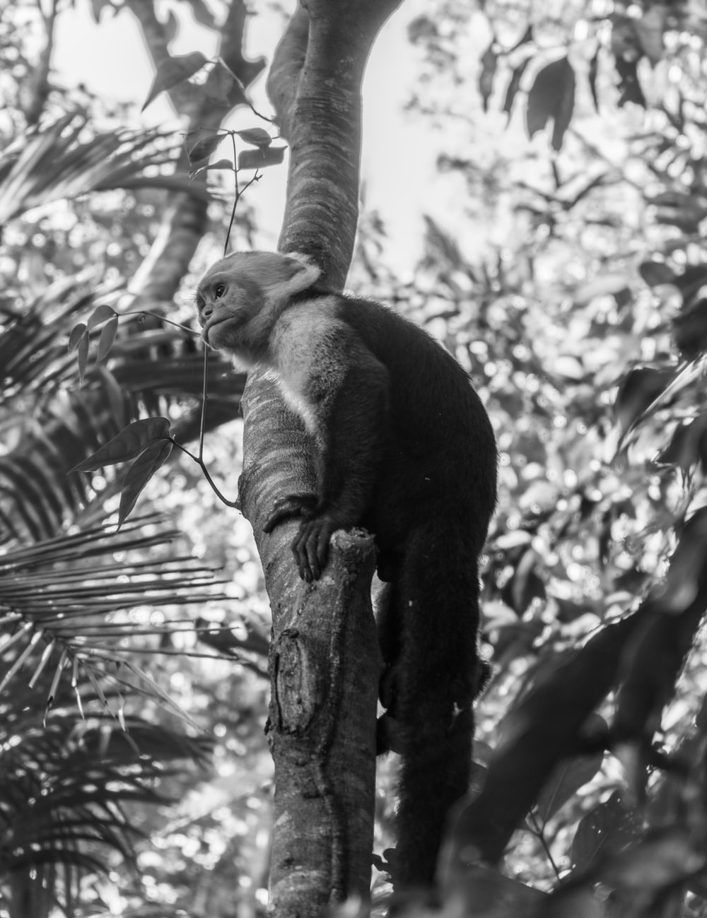 monkey on tree branch in grayscale photography