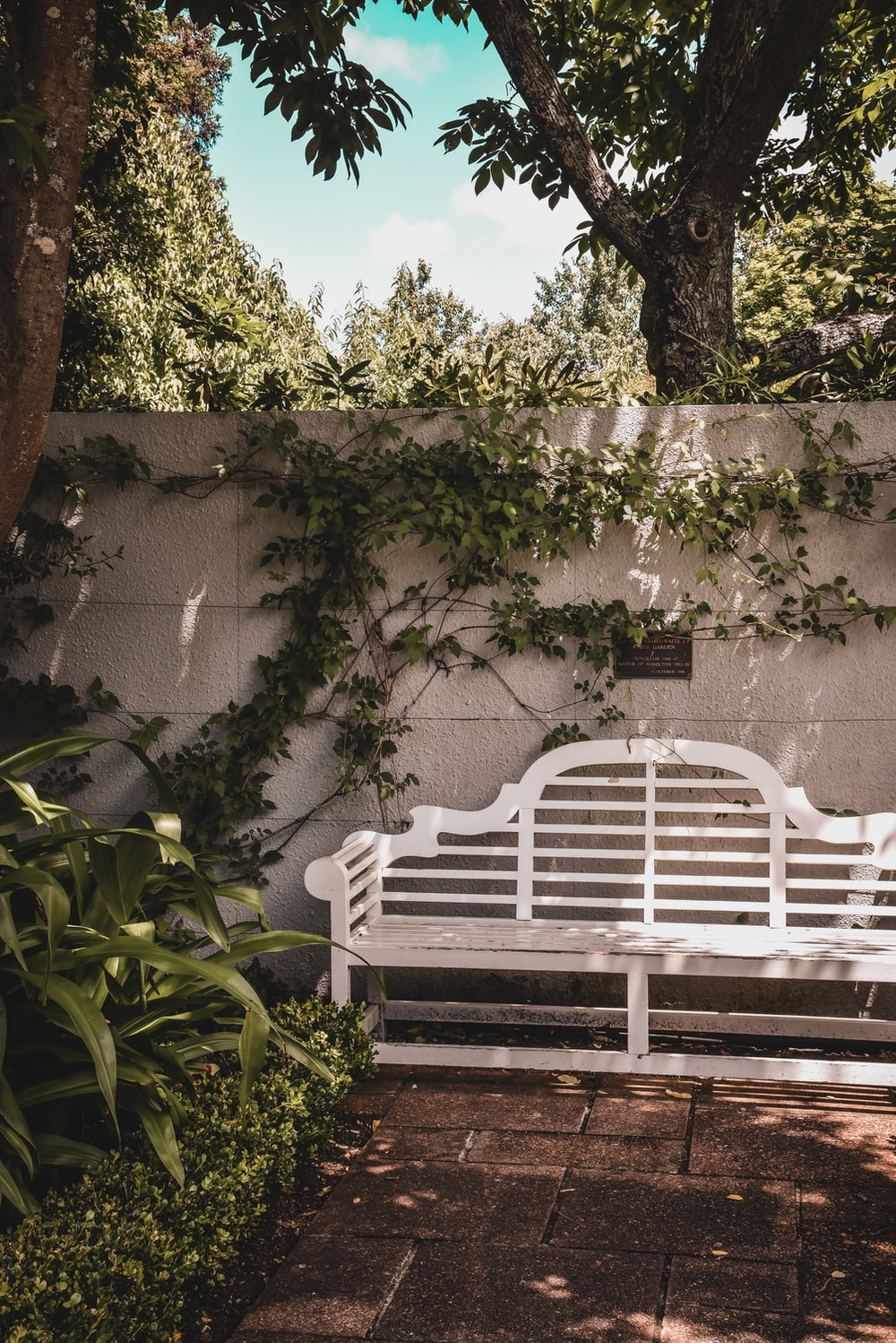 white wooden bench near green plants