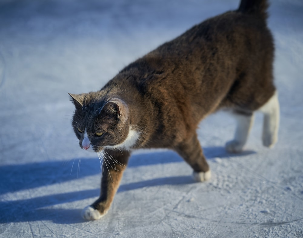 brown and white cat on snow covered ground