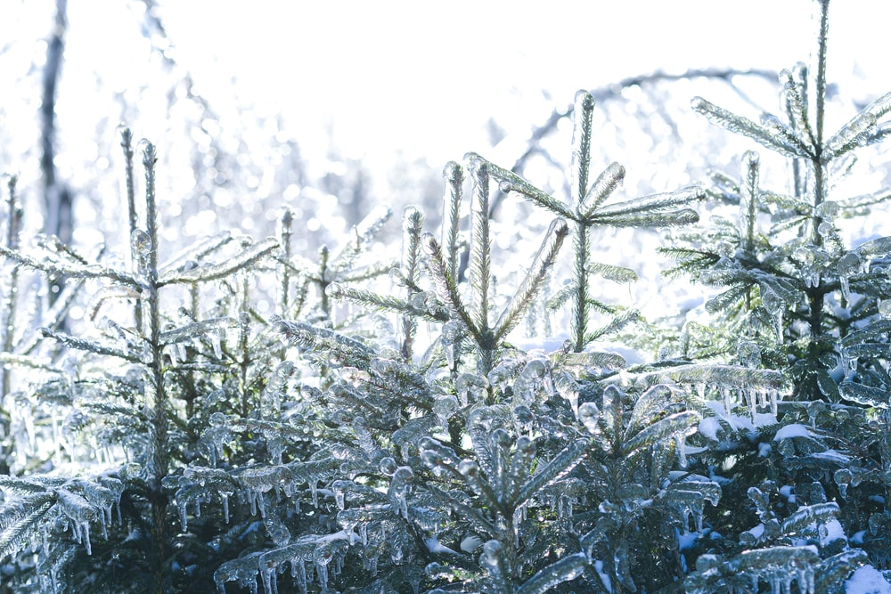 grayscale photo of snow covered plants