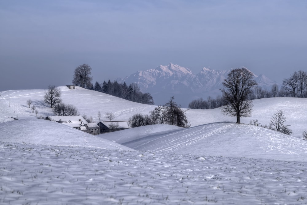 snow covered field with bare trees and mountains in distance